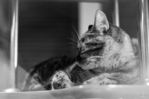 Lila the Cat, 20th August 2015