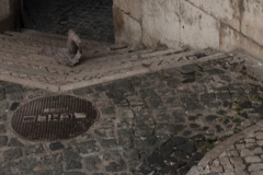 Lisbon, October 29th, 2013